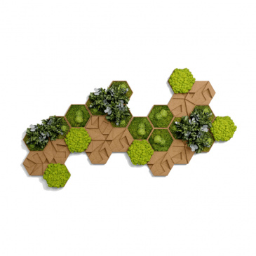 Moos-, Kork- & Pflanzen-Hexagon Set